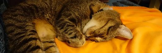 Wie die Katze schlafen